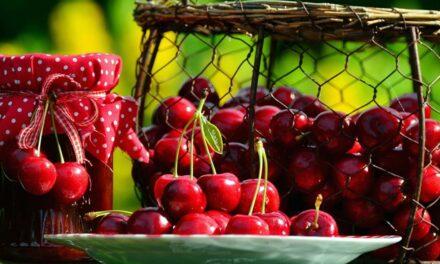 Säsongens bär, frukt och grönsaker